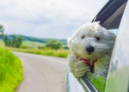 Summer Car Care for Chicago - MilitosAutoRepair.com